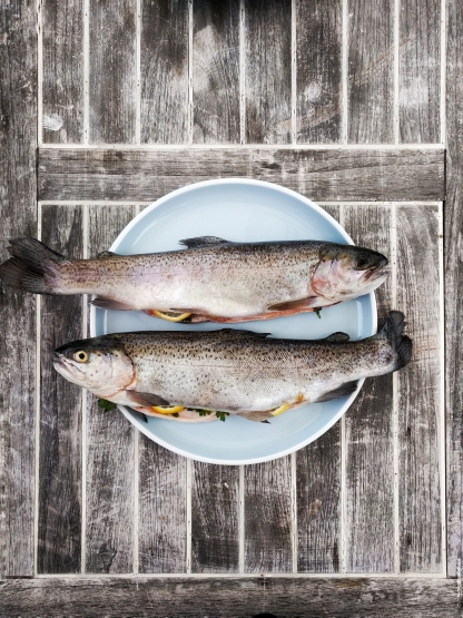 Fish Basics » Thursday, 4 July 2019 at 19 h